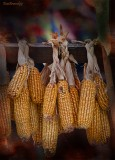 Ethnic Cultural Park.Drying of corn