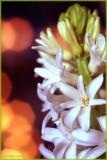 FLOWER for XMAS
