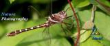 DragonfliesBanner.jpg