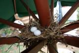 Home-Garden_28-7-2012 (12).JPG