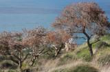 Stela-Maris_26-12-2011 (40).JPG