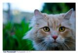 Nice cat ...