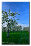 Future apples ...