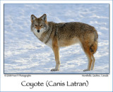 Canis Latran ...
