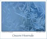 Winter Creation ...