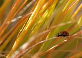 Marienkäferchen / Ladybug