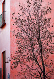 Pink wall and tree