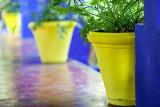Yellow pots