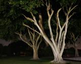 Night lighted trees