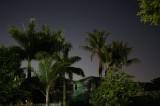 Neighborhood trees at night