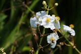 NEX 135mm Chinon - Flowers
