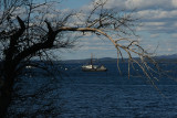 Fishing boat and craggy tree