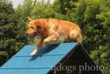 Dog Agility - Master Standard 4