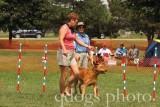 Dog Agility - Starter Standard 3