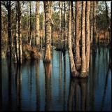 Blackwater Cypress Swamp