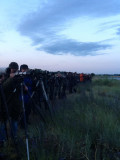 Western sandpiper - early morning twitchers!