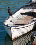Cormorant on dinghy.jpg