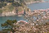 Week 15 - The Overbecks Magnolia.jpg
