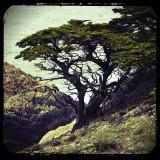 Cypress Pt.jpg