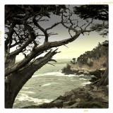 Monterey Lobos.jpg