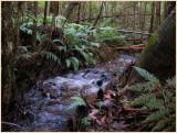 Small stream -  Warburton