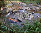 Yarra river Warburton