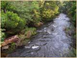 Yarra river  Warburton.