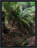 Moss covered tree fern
