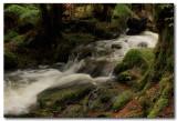 Rainforest water flow