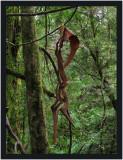 Abstract bark