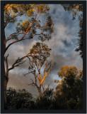 Treescape Gallery