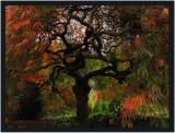 Autumn at Cloud Hill Gardens  -  series