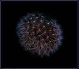 Flouro dandelion