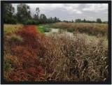 Yarra Flats Billabong Reserve