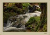 Rainforest Walk series