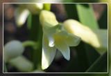 hyacint macro