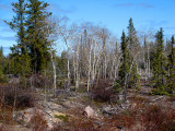 Yellowknife landscape