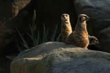 Zoo 002b.jpg