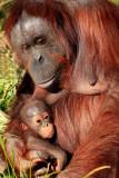 Zoo 158b.jpg