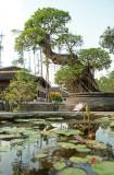 Hue Citadel, River and Thien Mu Pagoda