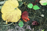 Fungus: glowing to deep blood-red.