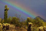 Desert Rainbow - Taliesen West