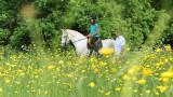 141:366Ride a White Horse