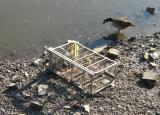 Industrial size trolley dumped in river.