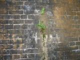 Plants growing in a crack in the pier.