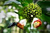Bee n Bloom