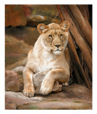 Lioness in Repose (full size)