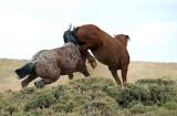 Mustangs: 2012