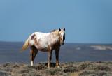 Mustangs: 2012 #2