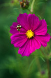 BLA_3098.web..jpg
